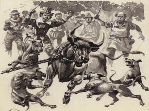 Bull Baiting by Pat Nicolle