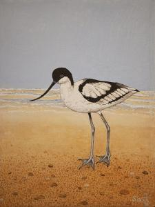 Avocet, 2016 by Pat Scott