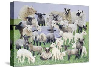 Feeling Sheepish by Pat Scott