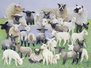 Feeling Sheepish by Pat Scott