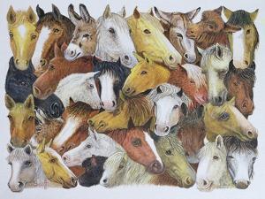 Horses Horses by Pat Scott