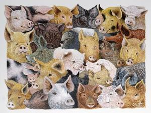 Pigs Galore by Pat Scott