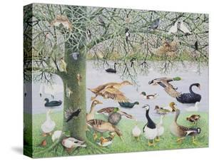 The Odd Duck by Pat Scott