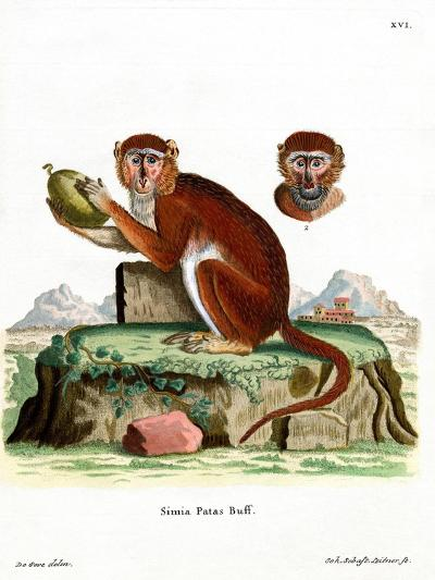 Patas Monkey--Giclee Print