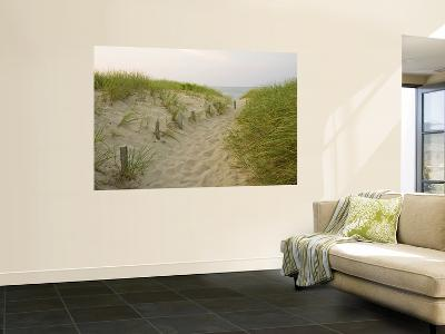 Path at Head of the Meadow Beach, Cape Cod National Seashore, Massachusetts, USA-Jerry & Marcy Monkman-Giant Art Print