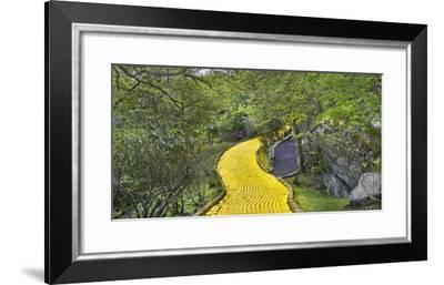 Path in a forest, Wizard of Oz Park, North Carolina, USA-Panoramic Images-Framed Photographic Print