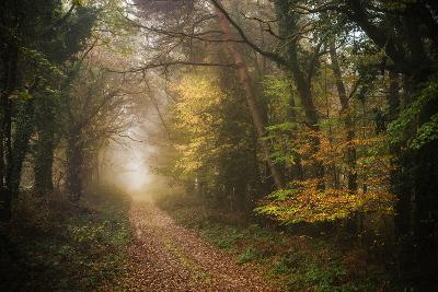 Path in Autumn Forest-Philippe Manguin-Photographic Print