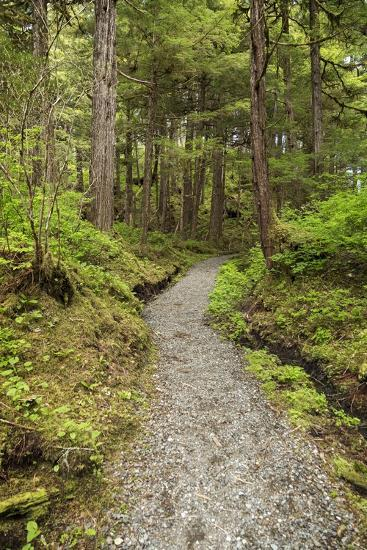 Path Inside Tongass National Forest-Macduff Everton-Photographic Print