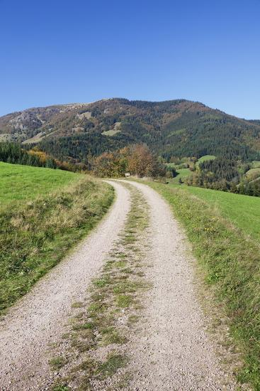 Path Leading to Belchen Mountain, Black Forest, Baden Wurttemberg, Germany, Europe-Markus-Photographic Print