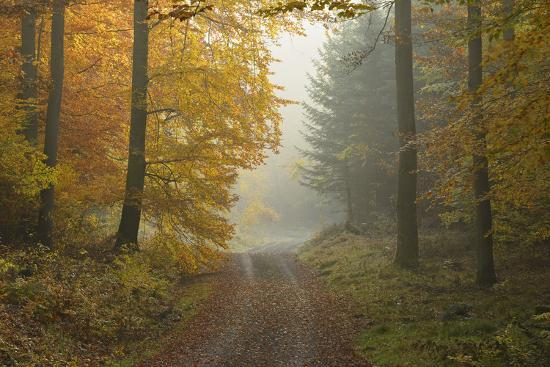 Path through Beech Forest in Autumn, Spessart, Bavaria, Germany-Michael Breuer-Photographic Print