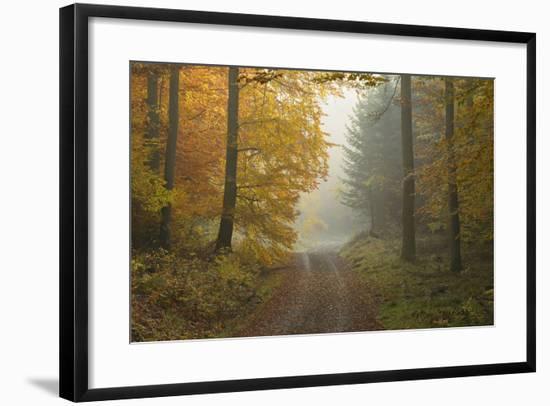 Path through Beech Forest in Autumn, Spessart, Bavaria, Germany-Michael Breuer-Framed Photographic Print