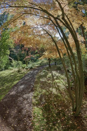 Path Through the Bloedel Reserve, Bainbridge Island, Washington, USA-Jaynes Gallery-Photographic Print