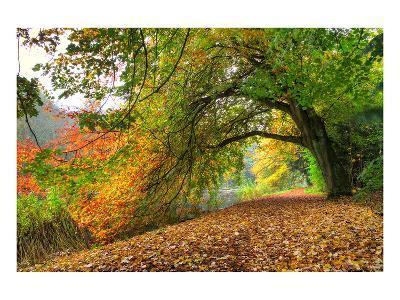 Path Under a Big Autumn Tree--Art Print