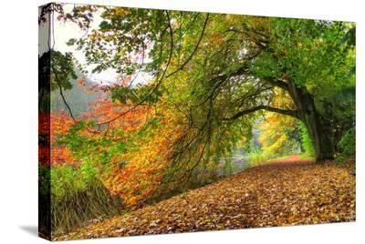 Path Under a Big Autumn Tree--Stretched Canvas Print