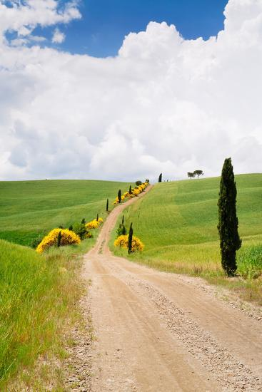 Path with Cypress Trees in Field, San Quirico D'Orcia, Val D'Orcia, Siena Province, Tuscany, Italy--Photographic Print
