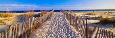 Pathway and Sea Oats on Beach at Santa Rosa Island Near Pensacola, Florida--Photographic Print