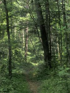 Pathway of the Wilderness Road, Levi Jackson Wilderness Road State Park, Kentucky