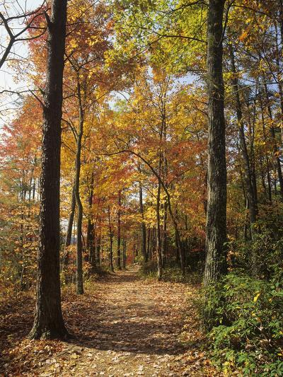 Pathway Through an Autumn Deciduous Forest, Red River Gorge Geological Area-Adam Jones-Photographic Print