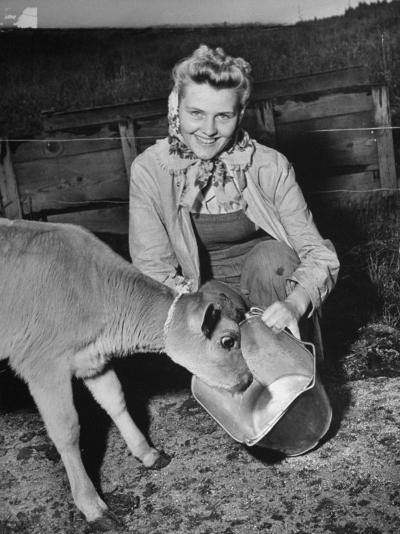 Patricia Colleen Altree Teaching a Calf How to Drink Milk from a Pail--Photographic Print