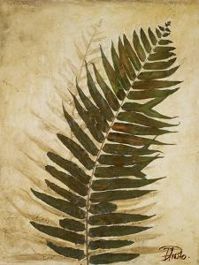 Ferns II by Patricia Pinto