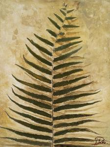 Ferns III by Patricia Pinto