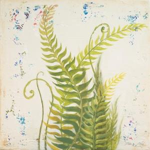 Nice Ferns I by Patricia Pinto