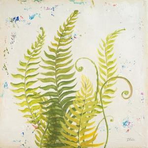Nice Ferns II by Patricia Pinto