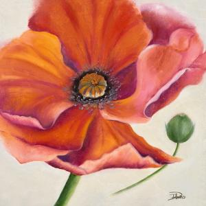 Poppy Flower II by Patricia Pinto
