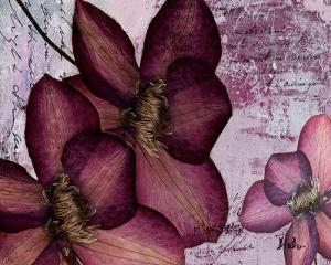Pressed Flowers II by Patricia Pinto