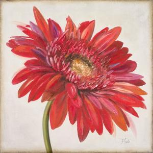 Red Gerber Daisy by Patricia Pinto