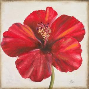 Red Hibiscus by Patricia Pinto