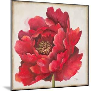 Red Peony by Patricia Pinto