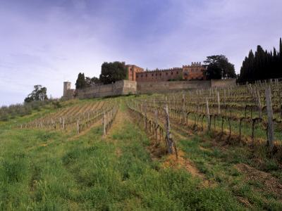 Castello Di Brolio and Famous Vineyards, Brolio, Chianti, Tuscany, Italy, Europe by Patrick Dieudonne
