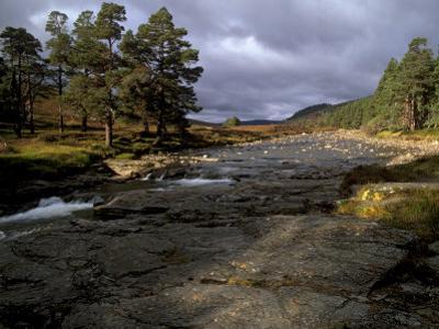 Scots Pines and Upper Dee Valley Near Inverey, Aberdeenshire, Highland Region, Scotland, UK by Patrick Dieudonne