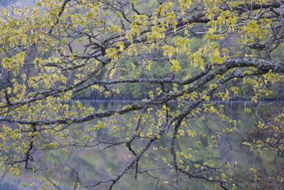 Canada, Novs Scotia, Cape Breton, Cabot Trail Lake in Spring by Patrick J^ Wall