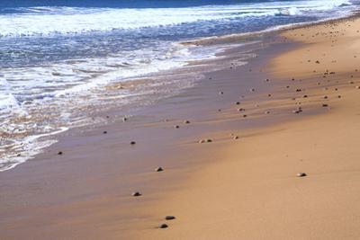 Nova Scotia, beach near the Cabot Trail, Cape Breton by Patrick J^ Wall