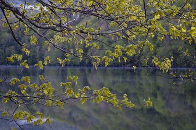 Quiet Morning in Fall, Cabot Trail, Cape Breton, Nova Scotia, Canada, North America by Patrick J^ Wall