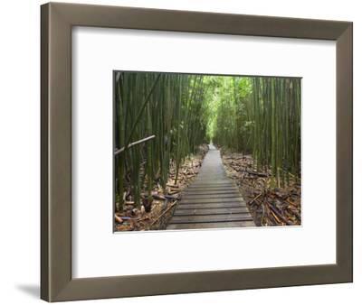 Boardwalk Trail Through a Bamboo Forest on Maui, Hawaii, USA