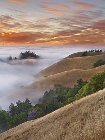 Fog Bank over San Francisco Bay Viewed from Mt. Tamalpais, California, USA by Patrick Smith