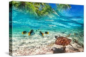 Green Turtle Swimming at Tropical Island of Caribbean Sea by Patryk Kosmider