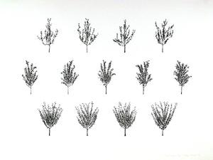 Fruit Trees from the A.I.R. Women's Portfolio by Patsy Norvell