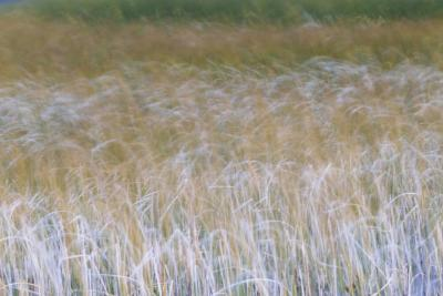 Patterns Of Grasses Along An Unnamed Marsh In Torres Del Paine National Park Chile, South America-Jay Goodrich-Photographic Print