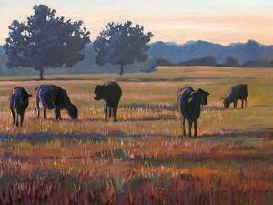 Foggy Morning Light by Patty Baker