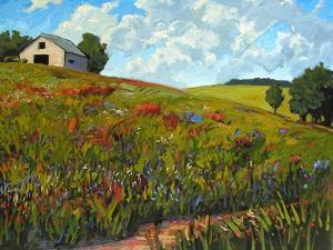 Wildflower Hillside in Boulder County, CO by Patty Baker