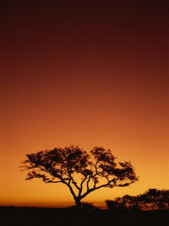 Single Tree Silhouetted Against a Red Sunset Sky in the Evening, Kruger National Park, South Africa by Paul Allen