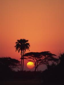 Tranquil Scene of Trees Silhouetted Against the Sun at Sunset, Okavango Delta, Botswana, Africa by Paul Allen
