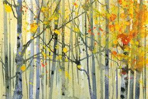 Autumn Birches by Paul Bailey