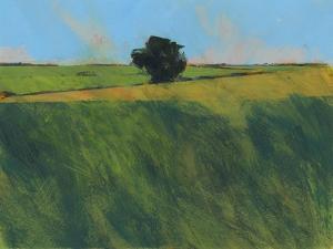 Lone Hedgerow Tree by Paul Bailey
