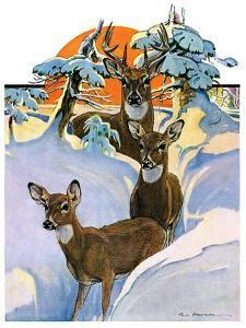 """Deer in Snow,""February 7, 1931 by Paul Bransom"