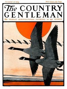 """Flock of Geese in Formation,"" Country Gentleman Cover, November 15, 1924 by Paul Bransom"